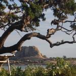Sri_Lanka_yala_national_park