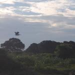 Sri_Lanka_yala_national_park_sky